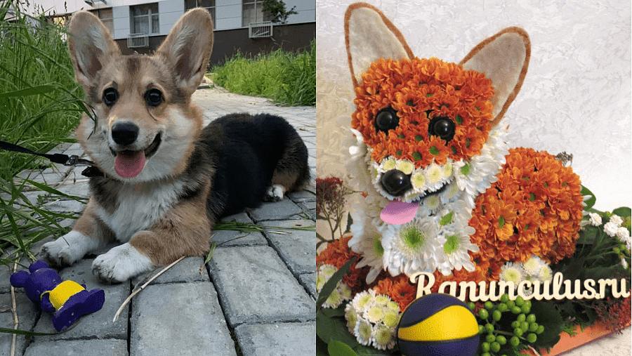 Собака породы корги из живых цветов