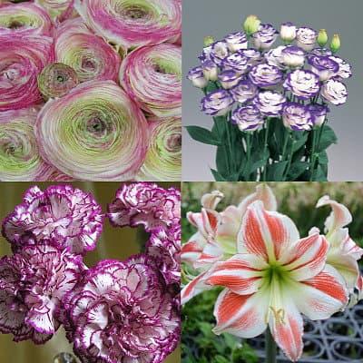 Представители Пикоти разных цветов