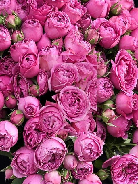 Розы Мисти Баблс